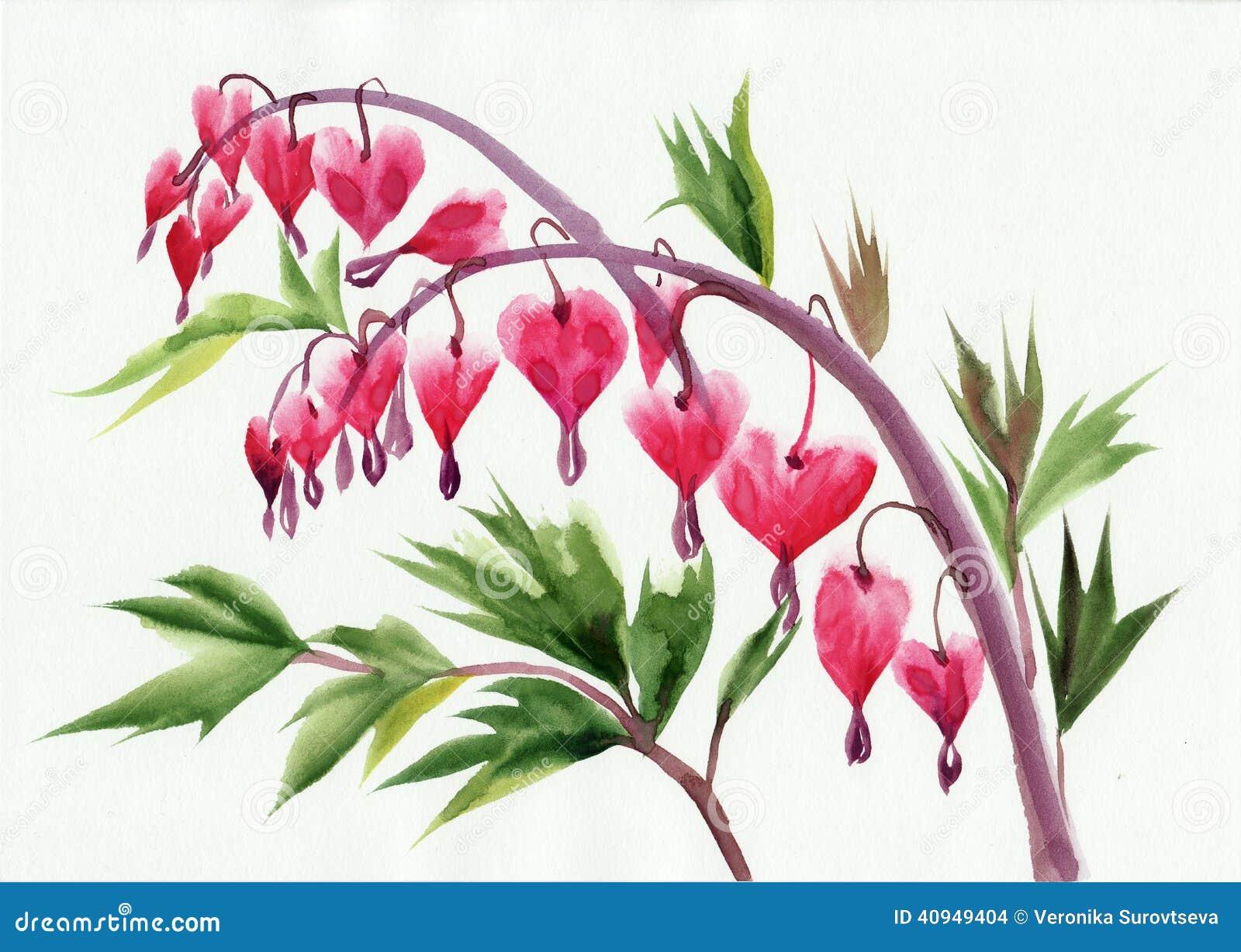 Bleeding Heart Flower Painting Bleeding Heart Flower Painting