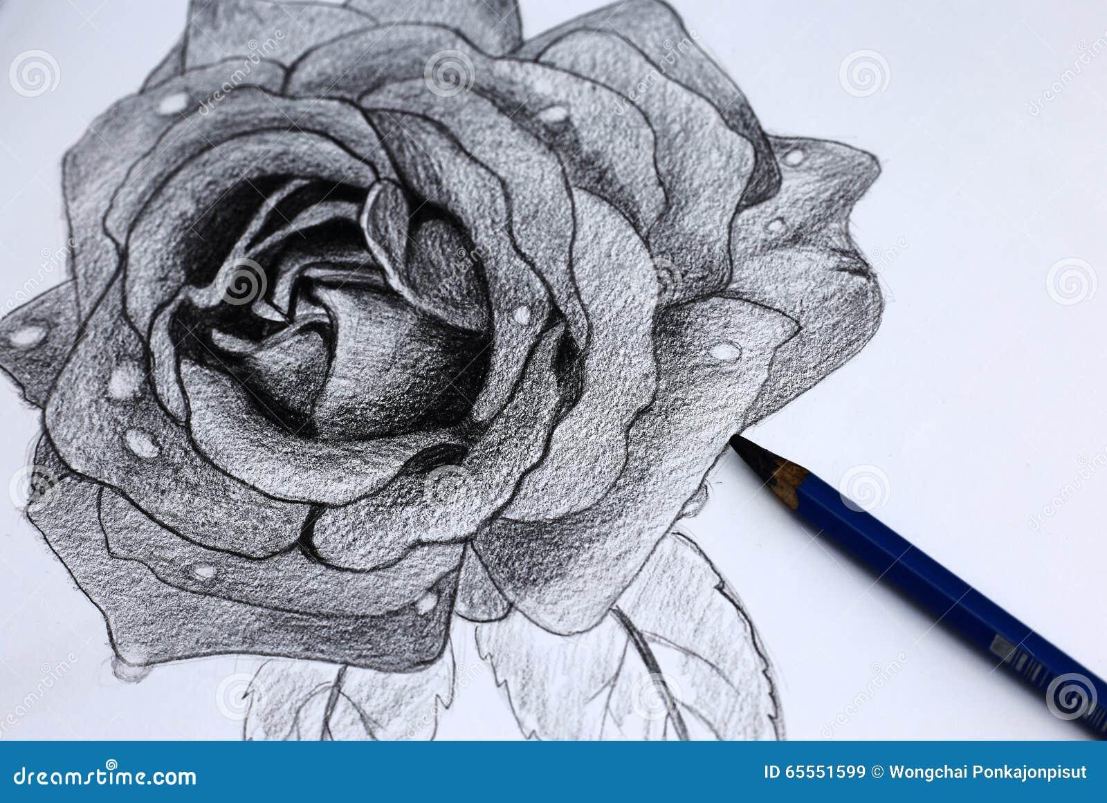 Bleistift Zeichnung I Von Blumen Stock Images 151 Photos