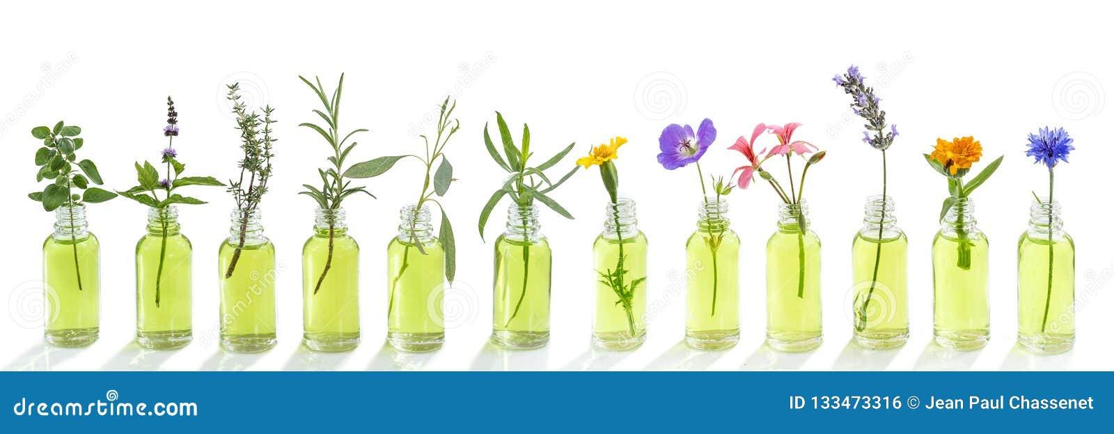 Bleuet panoramique de fleurs d huile essentielle, eucalyptus, estragon, géranium, géranium, lavande, menthe, dinde d oeillet, ori