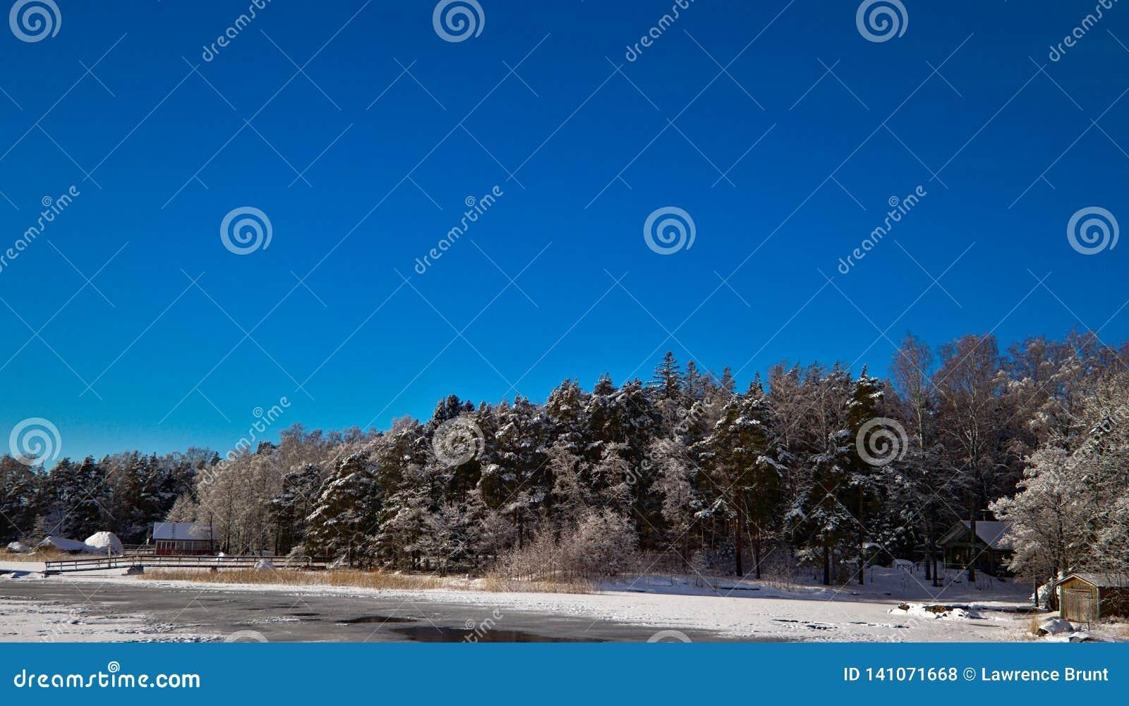 Bleus d hiver