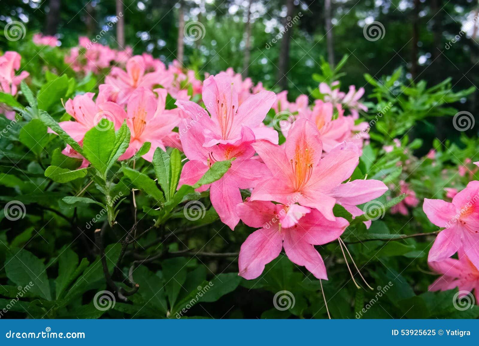 bl hende b sche mit rosa blumen stockfoto bild 53925625. Black Bedroom Furniture Sets. Home Design Ideas