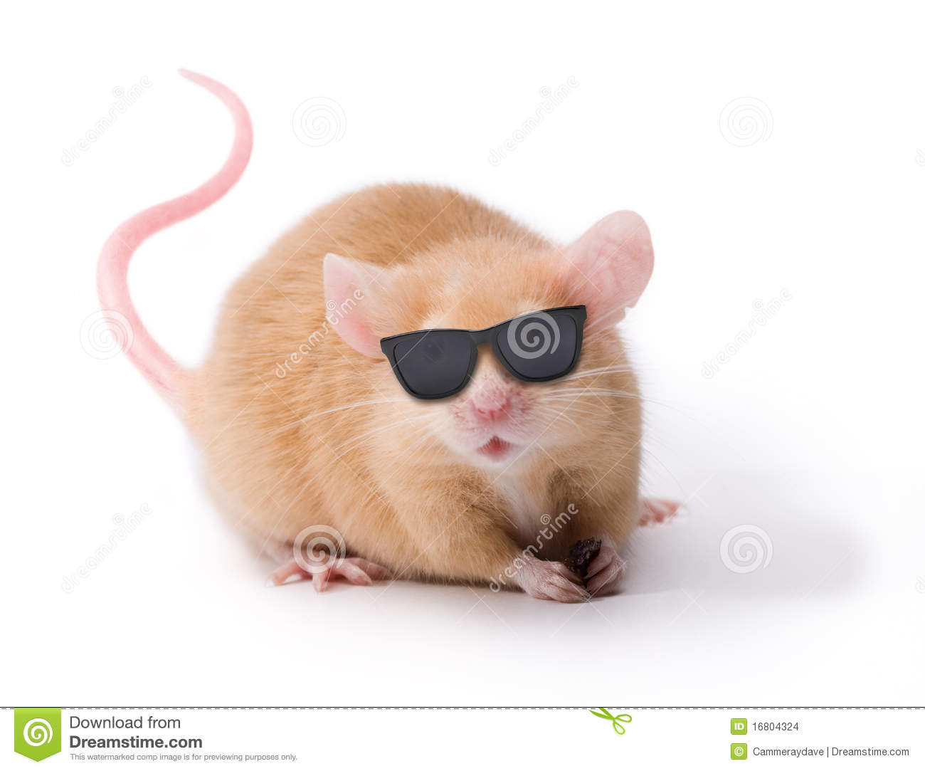 Blind Mouse With Sunglasses