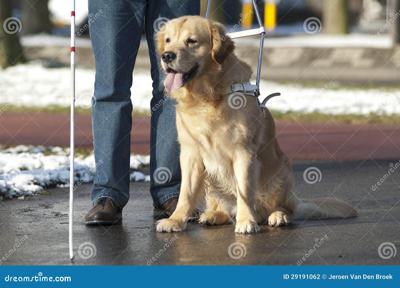 Blindenhund hilft einem blinden Mann