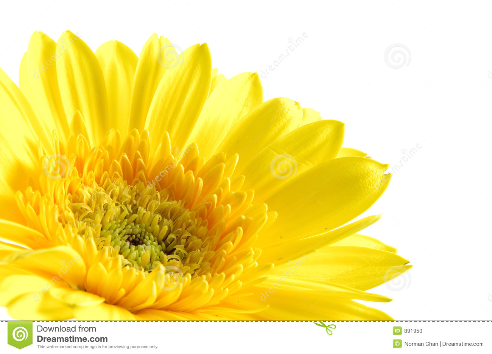 Blisko daisy gerber do żółtego