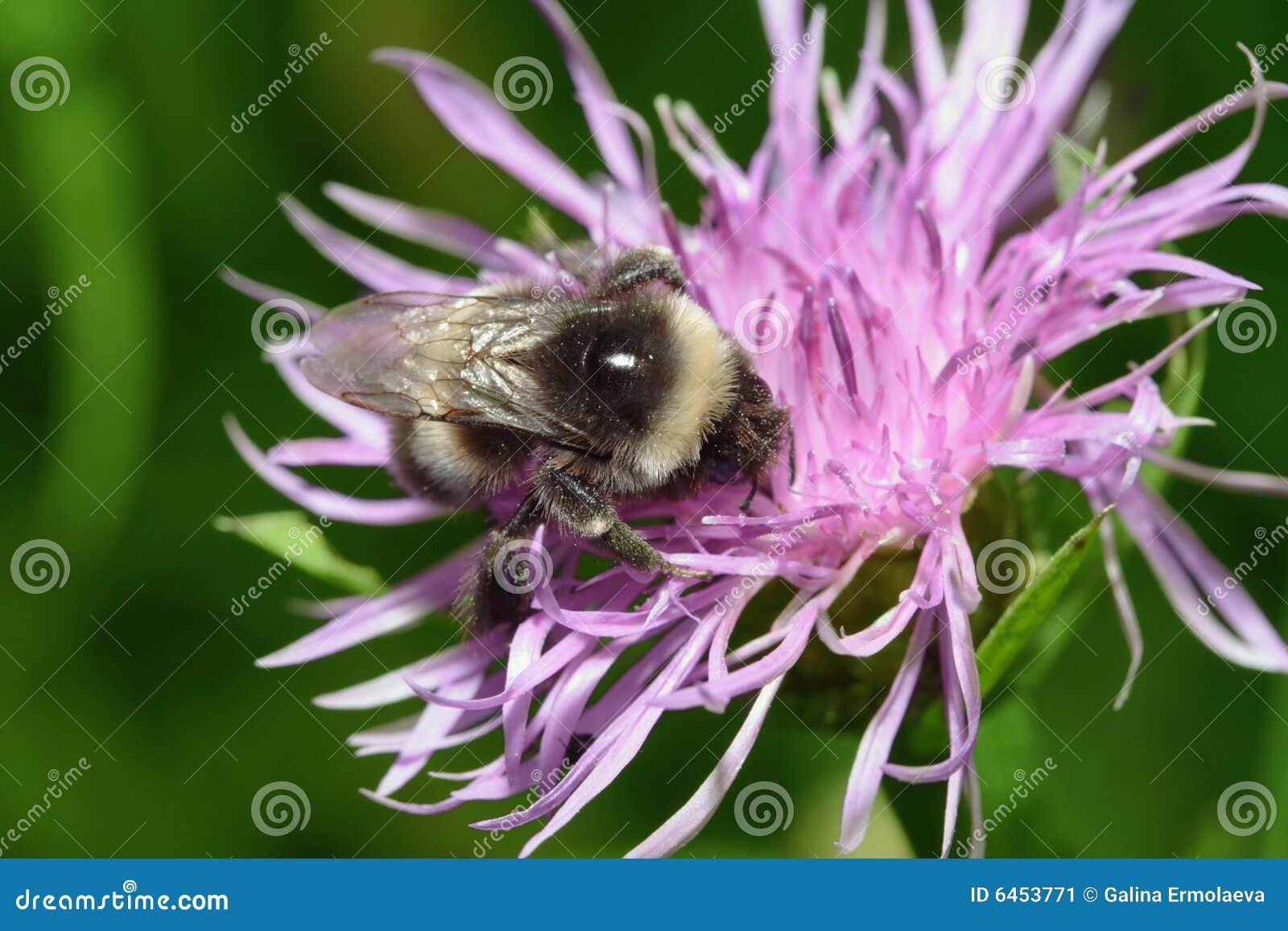 Blisko do pszczół