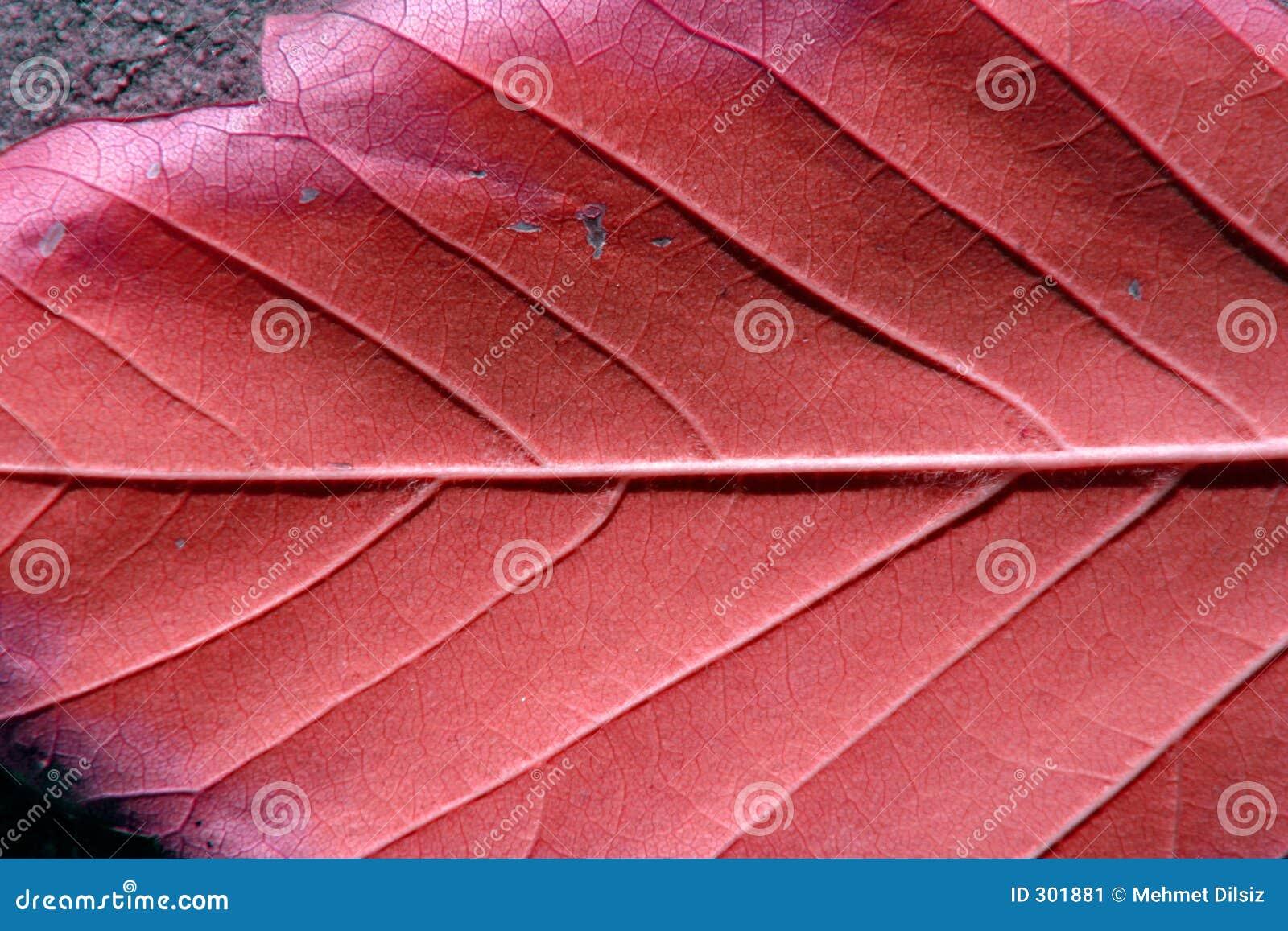 Blisko liści,