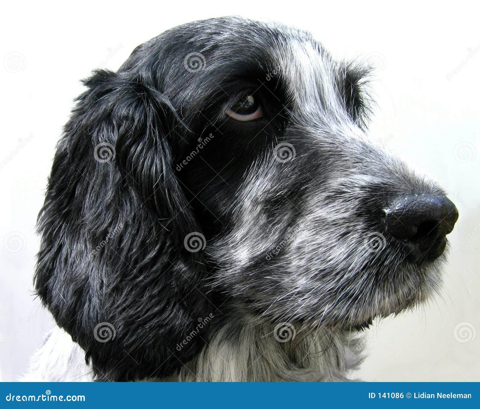 Blisko psa