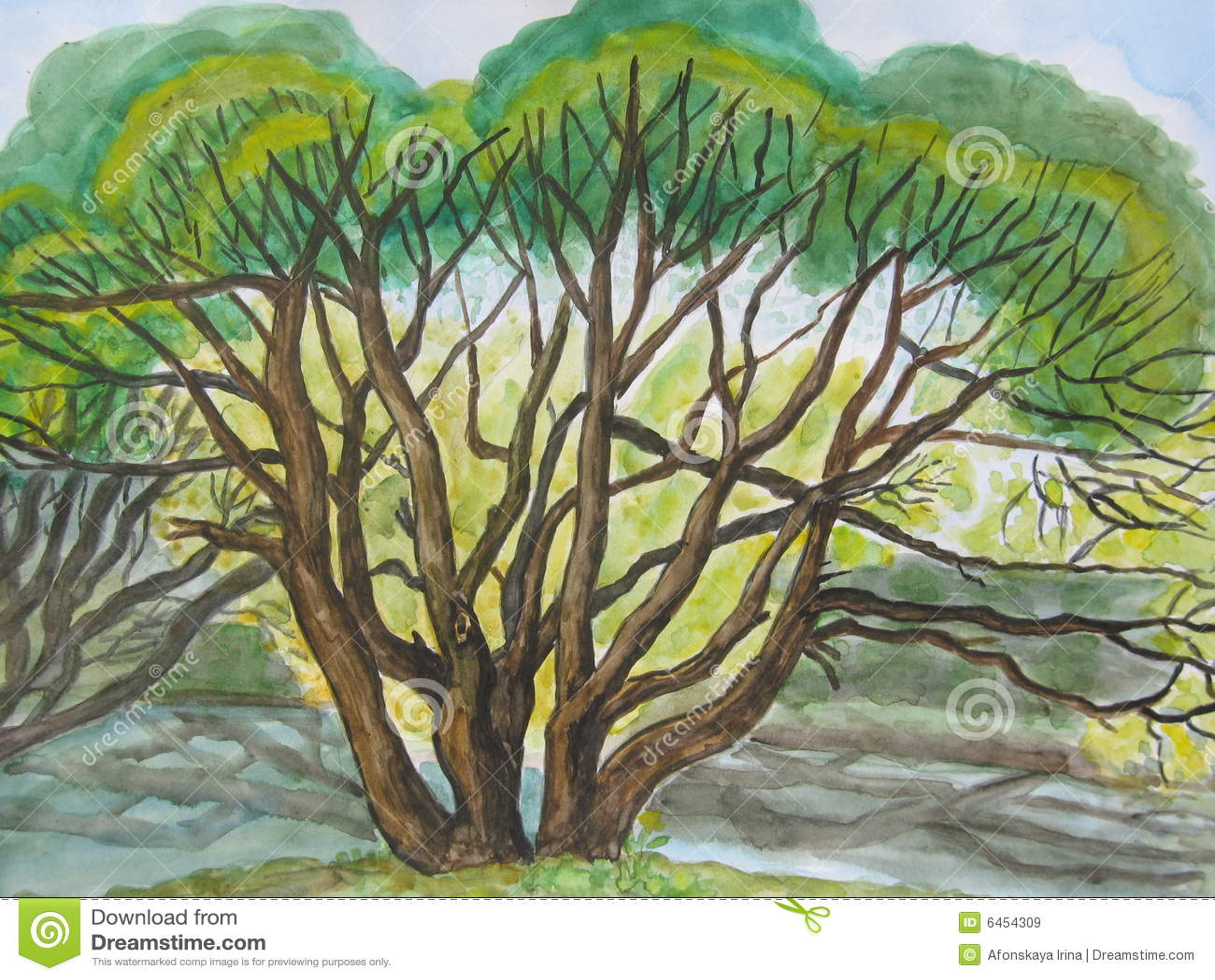 Blisko spring drzewa willow