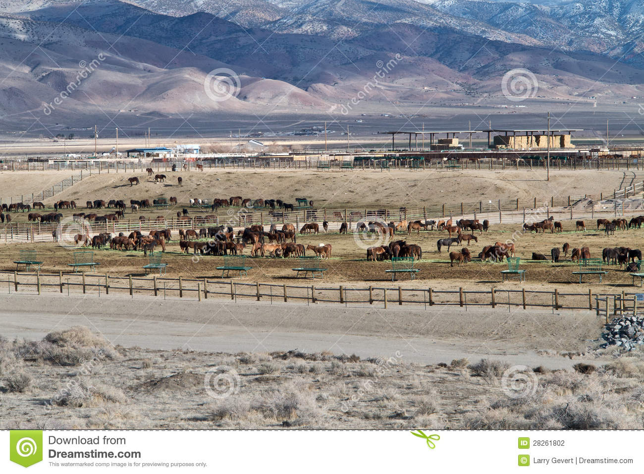 Blm Wild Horse Adoption Facility Stock Photography Image