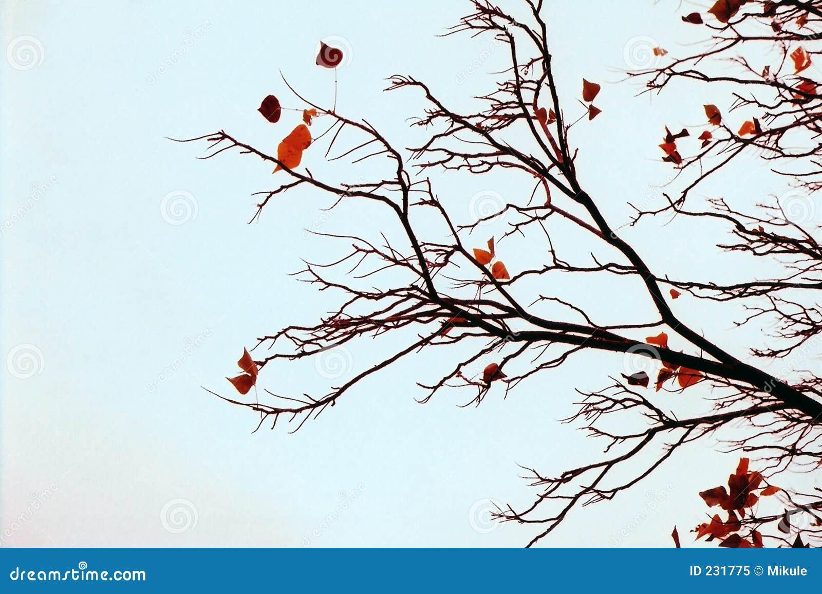 Bloße Zweige
