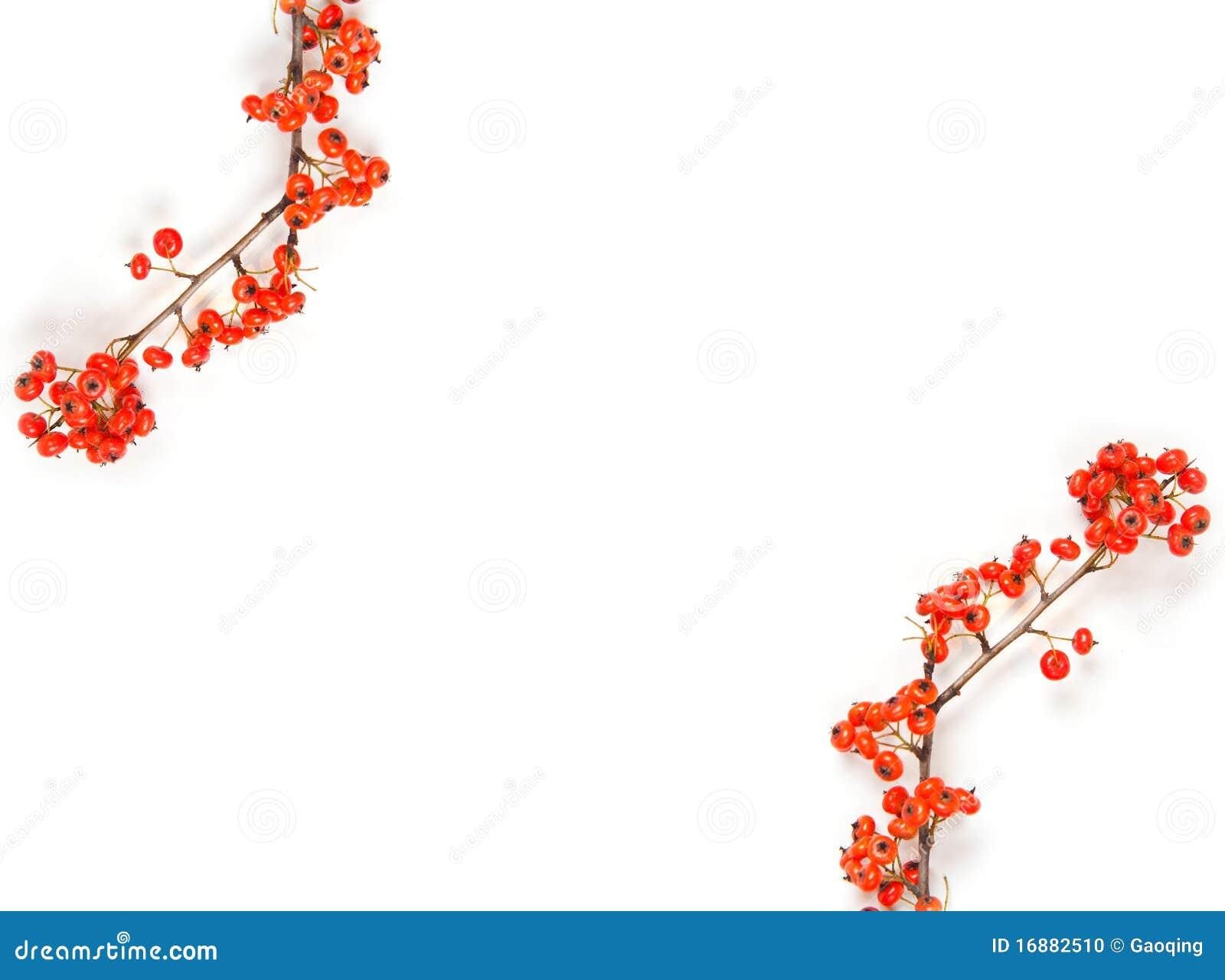 Blocco per grafici di natale con la bacca rossa isolata