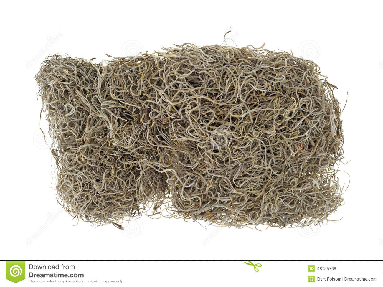 Spanish moss for crafts - Block Of Spanish Moss For Crafts Stock Photo
