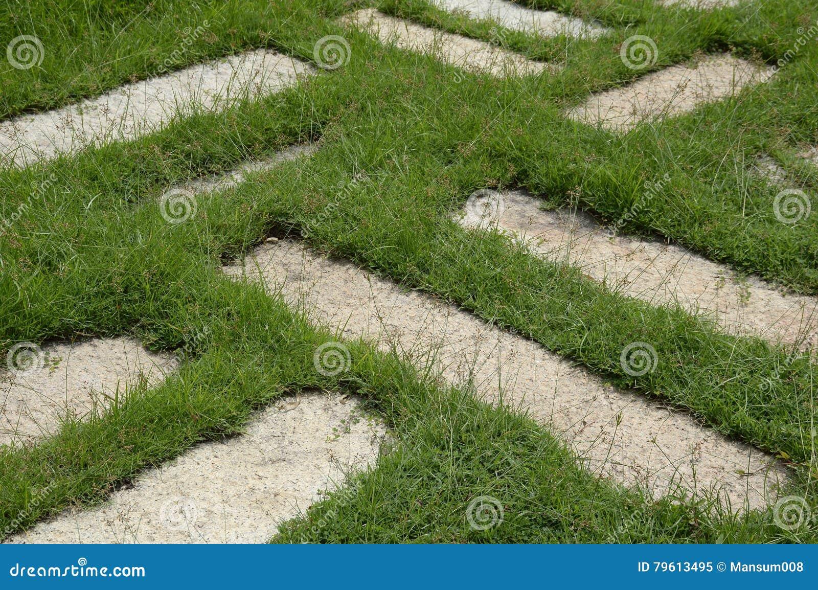 Blocos do cimento na grama verde