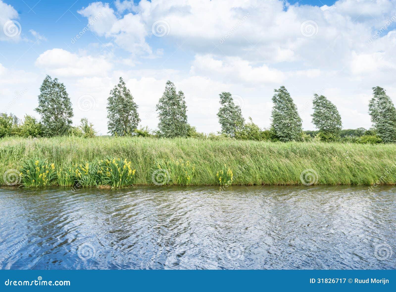 Bloeiend geel lis aan de andere kant van het water stock afbeelding afbeelding 31826717 - Groen behang van het water ...