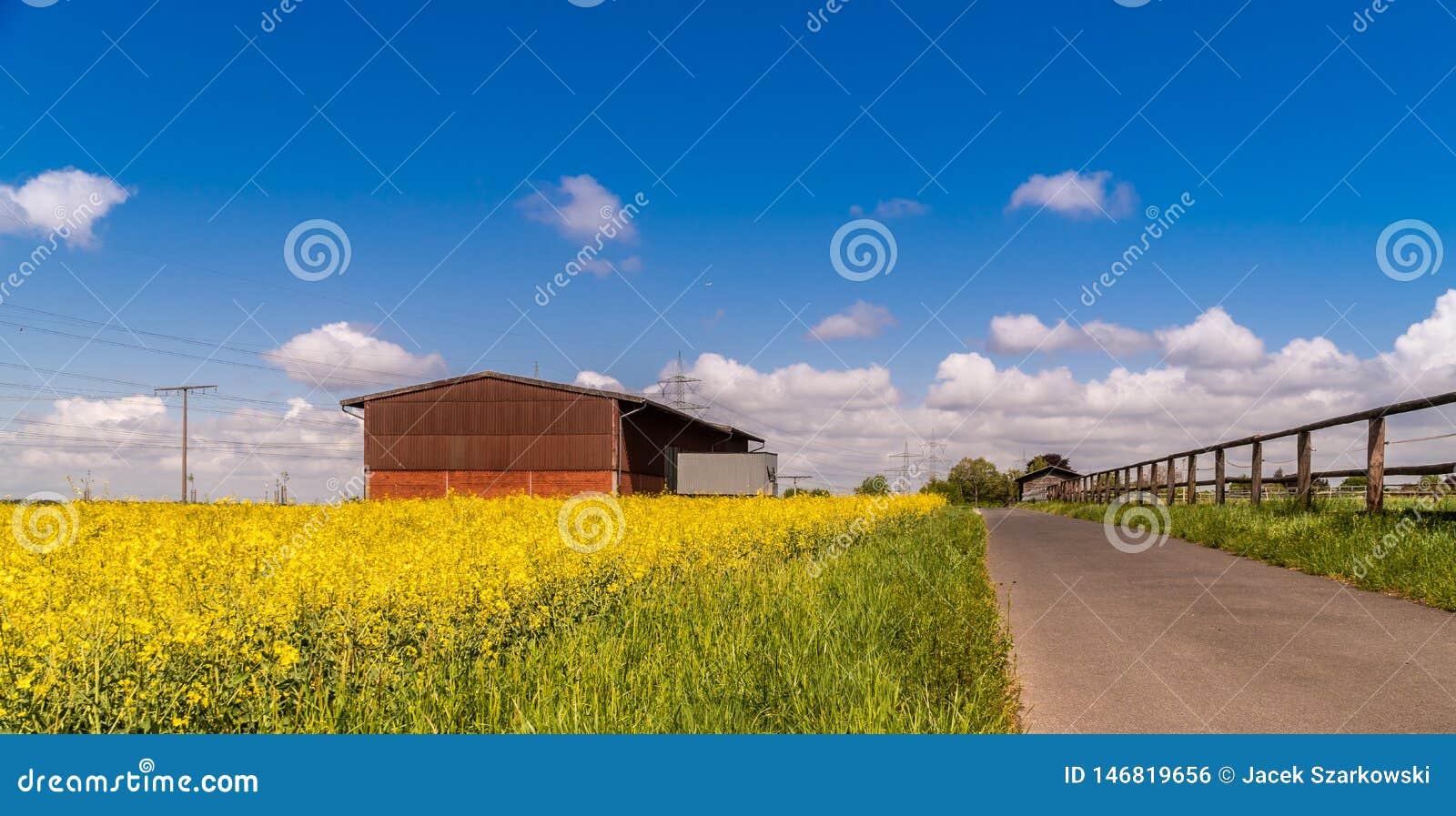 Bloeiend verkrachtingengebied onder de blauwe hemel De lente