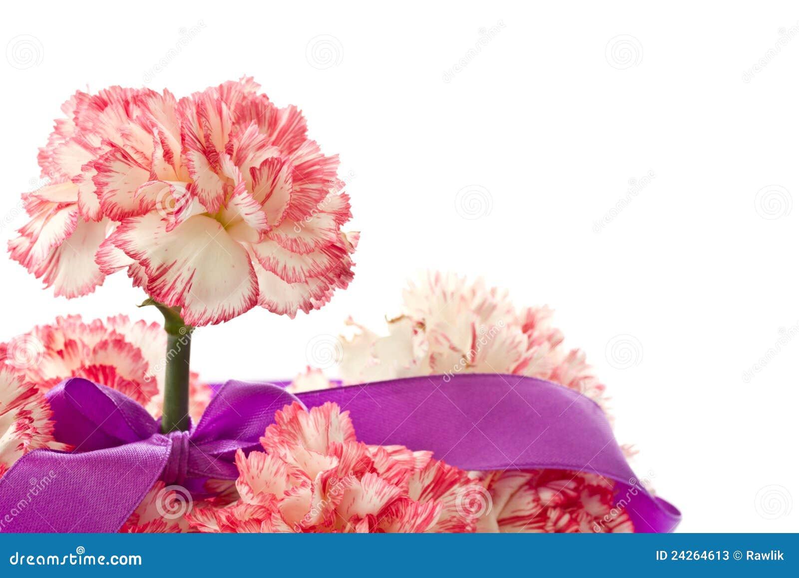 Bloeiende roze anjer