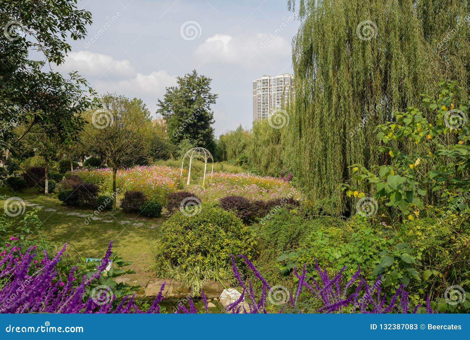 Bloeiende tuin in stad op zonnige middag