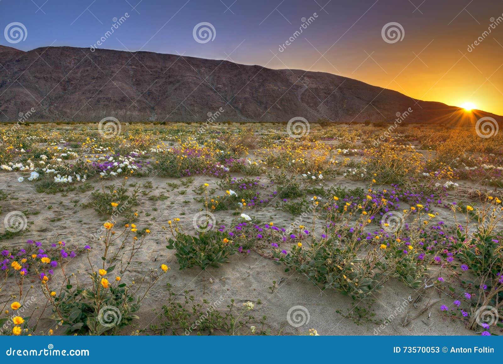 Bloeiende woestijn