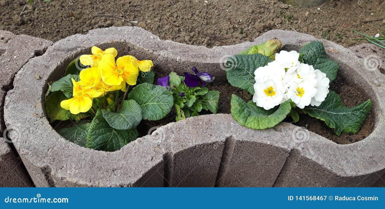 Bloem in een pot