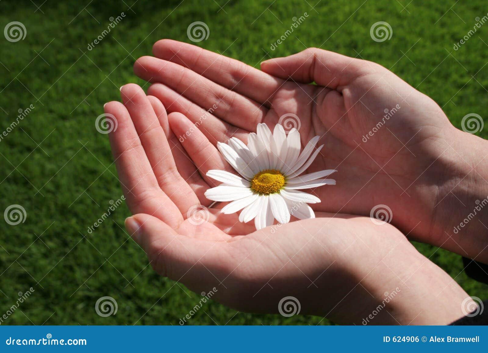 Bloem en Hand