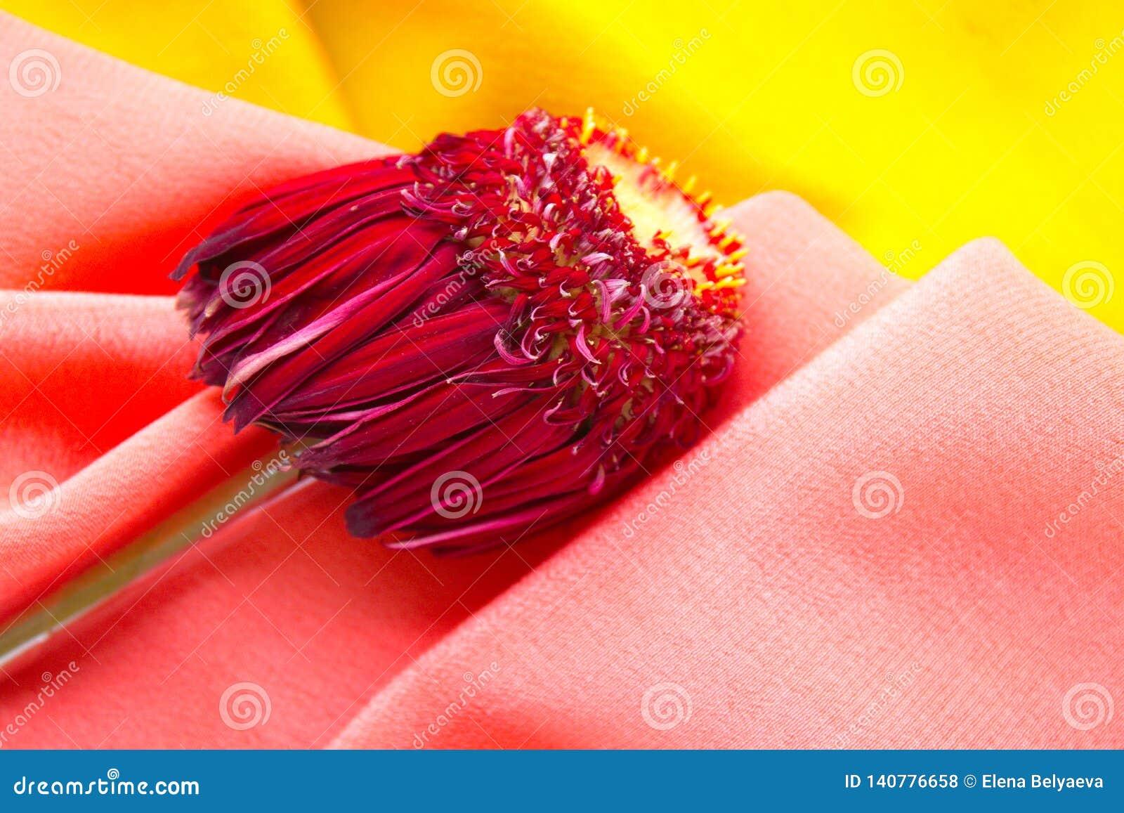 Bloem met purpere bladeren die op de roze en gele stof liggen