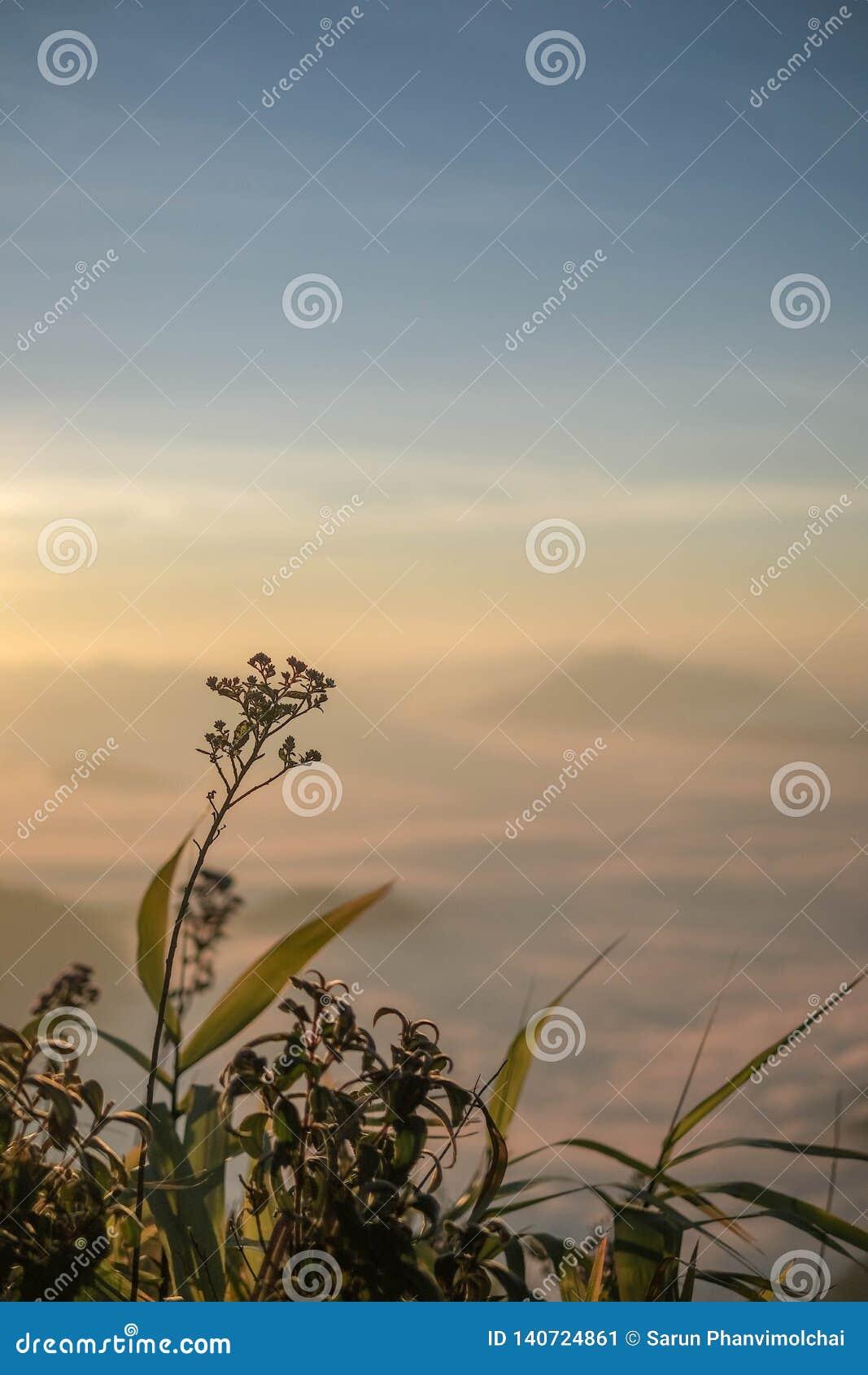 Bloem in ochtendzonsopgang met de meningsverticaal van de onduidelijk beeld backgorund berg