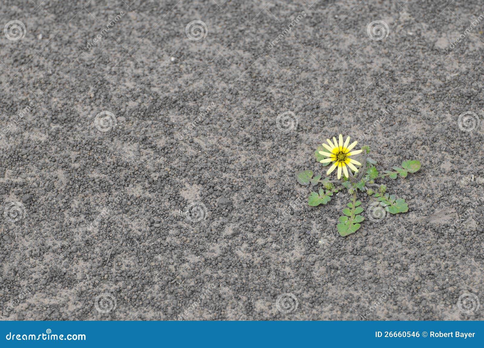 Bloem op droge grond stock foto afbeelding bestaande uit land 26660546 - Foto droge tuin ...