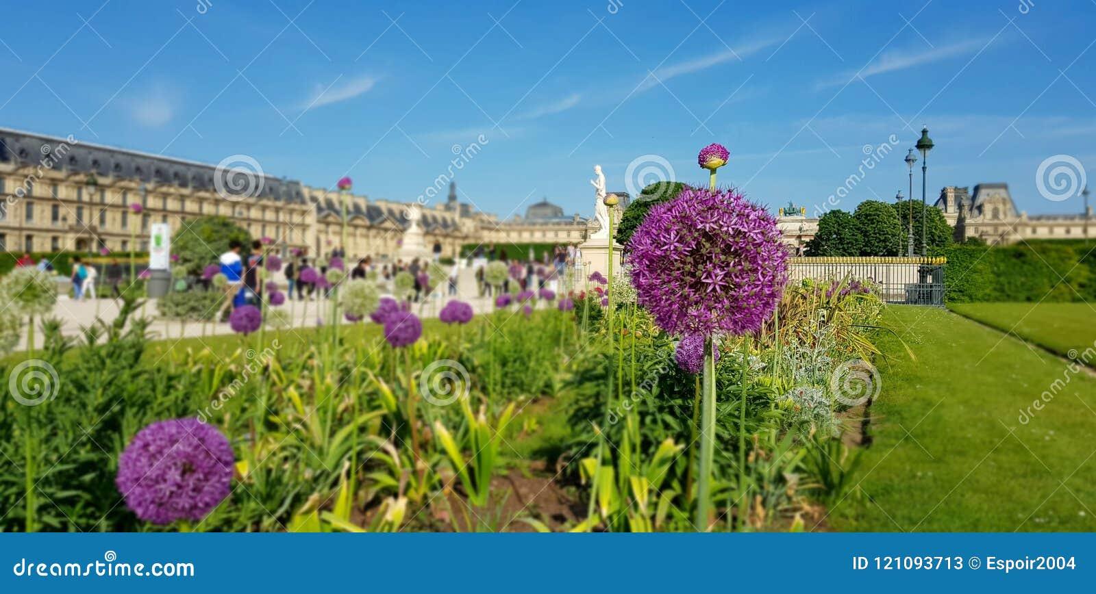 Bloem van de ui in de tuin van tuileries in Parijs nadruk op de bloem