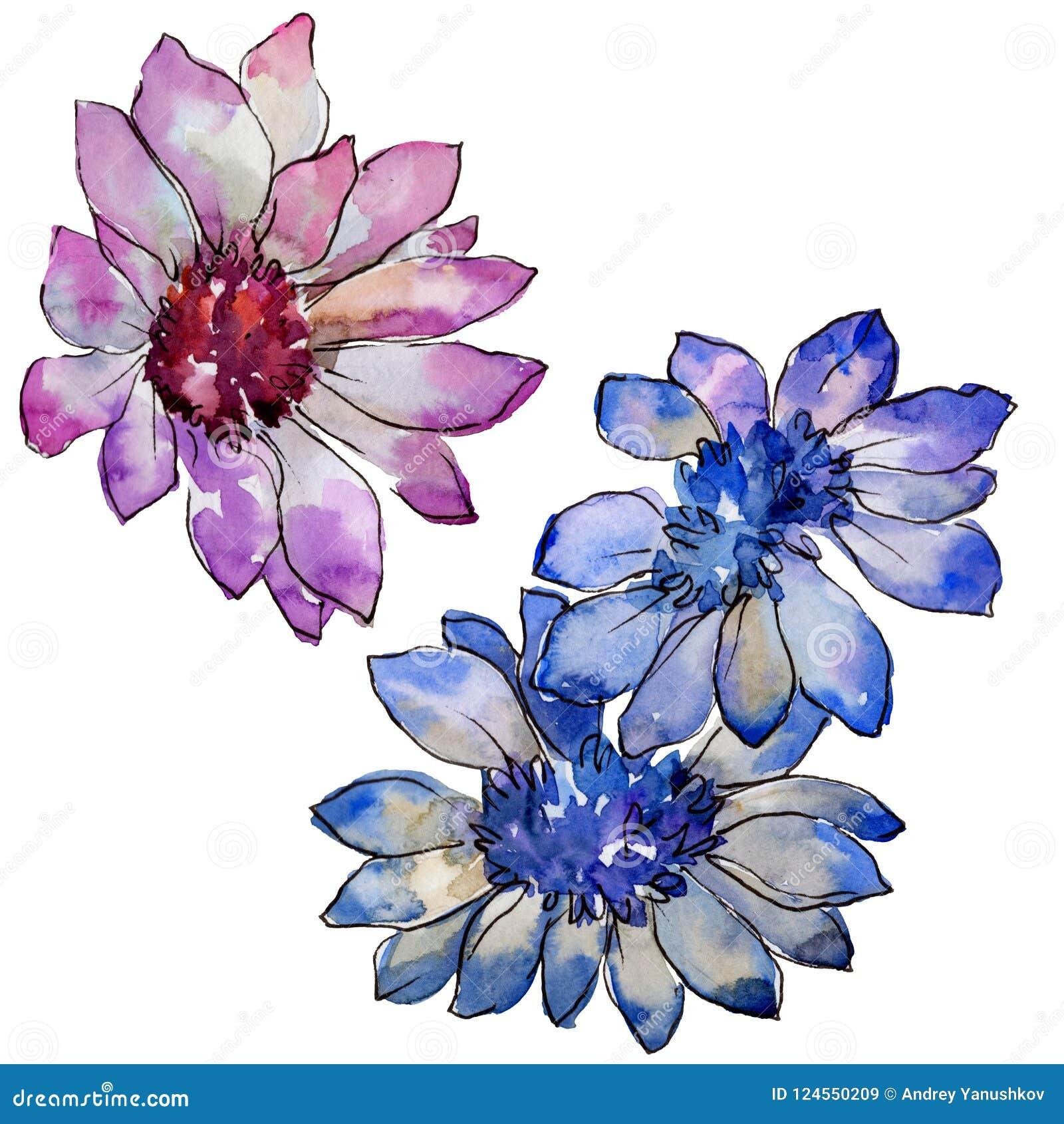 Bloem van het waterverf de kleurrijke Afrikaanse madeliefje Bloemen botanische bloem Geïsoleerd illustratieelement