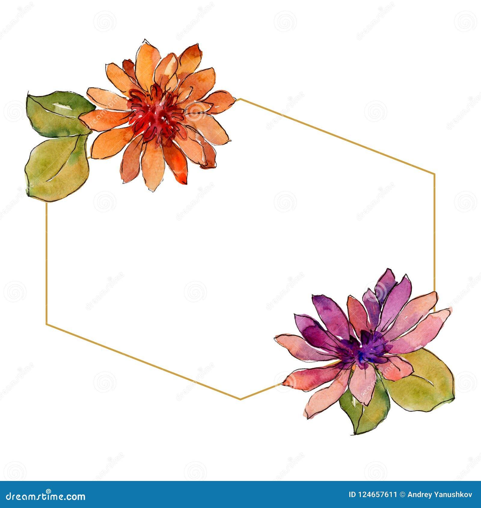 Bloem van het waterverf de kleurrijke Afrikaanse madeliefje Bloemen botanische bloem Het ornamentvierkant van de kadergrens