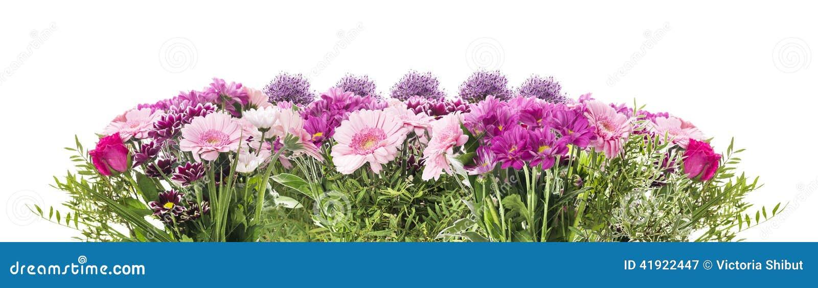 Bloembanner met roze geïsoleerd bloembed van gerberas,