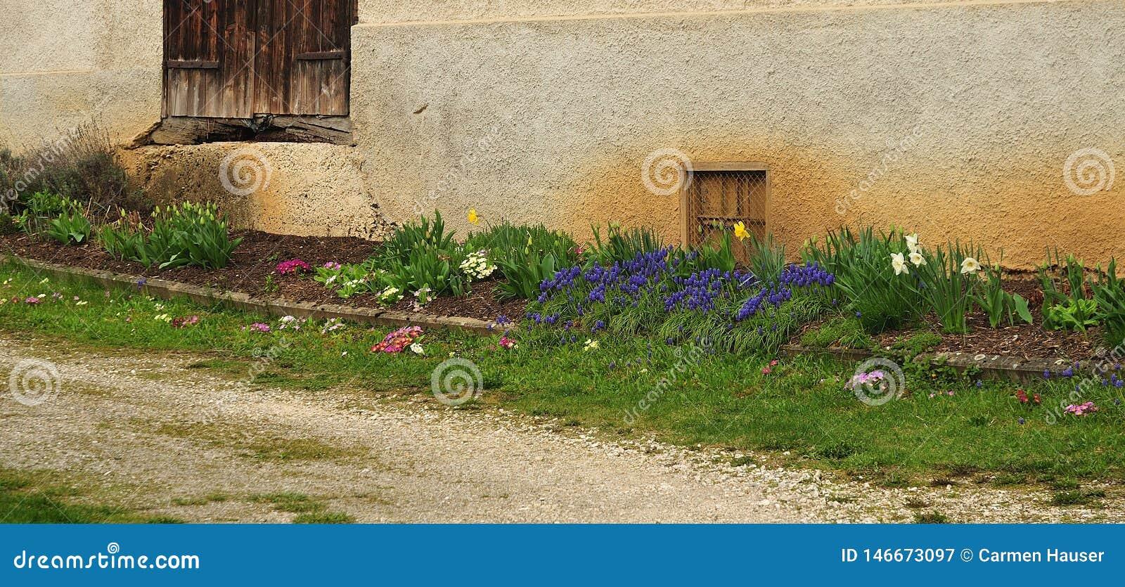 Bloembed bij voorgevel van oude boerderij met de lentebloemen