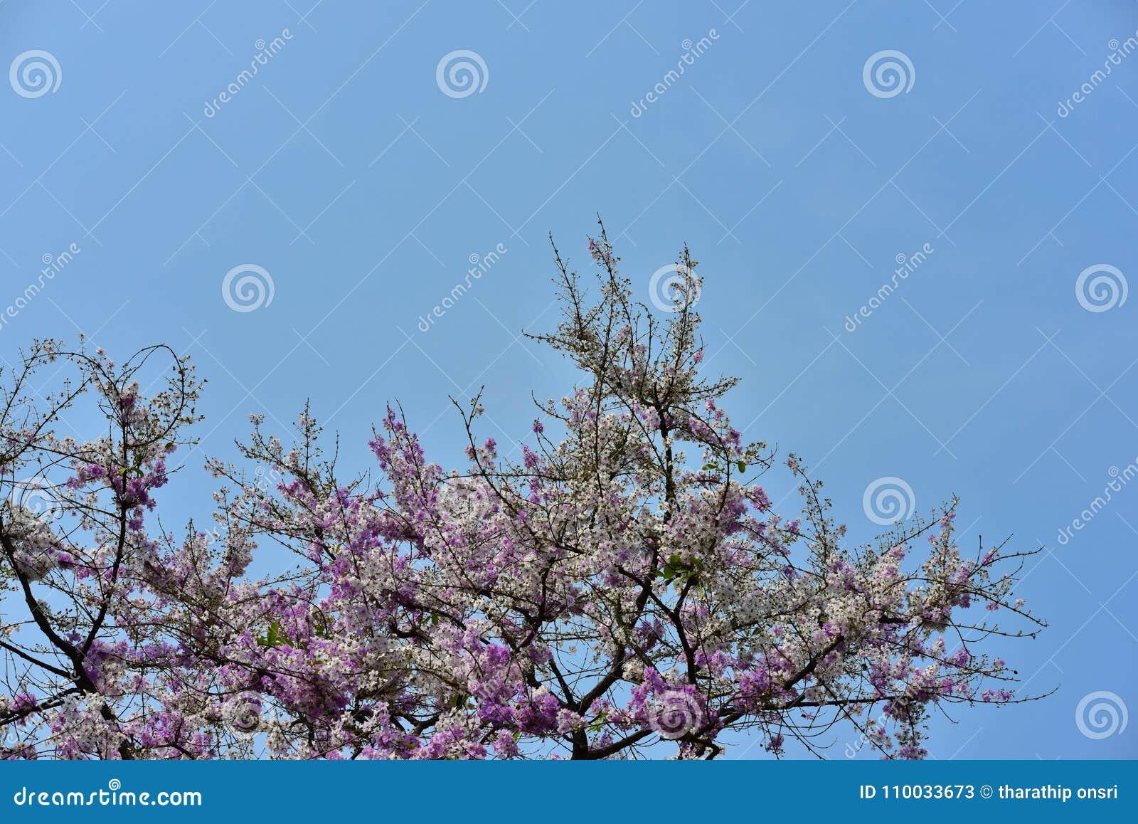 Bloembloesem op zijn boom in de lente