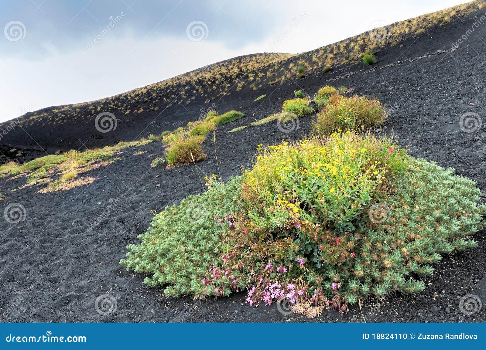 Bloemen bij de voet van de vulkaan