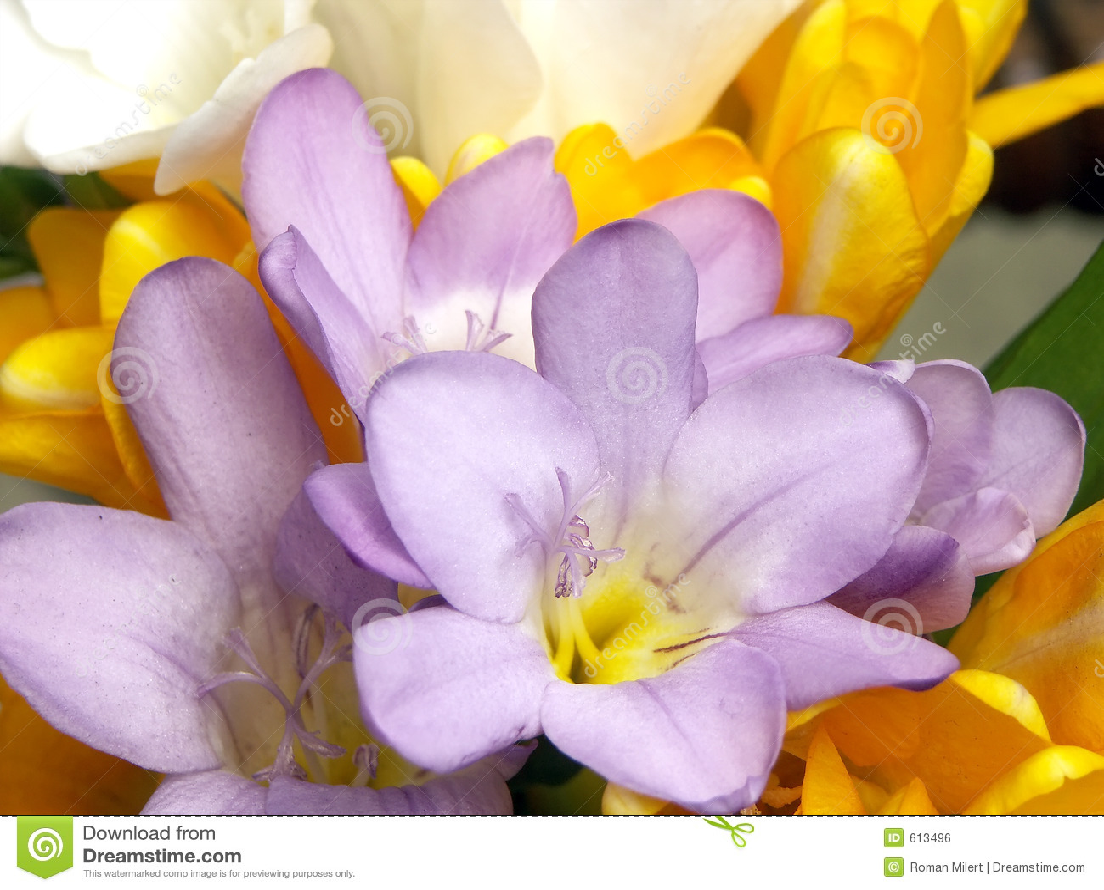 Bloemen in bloesem