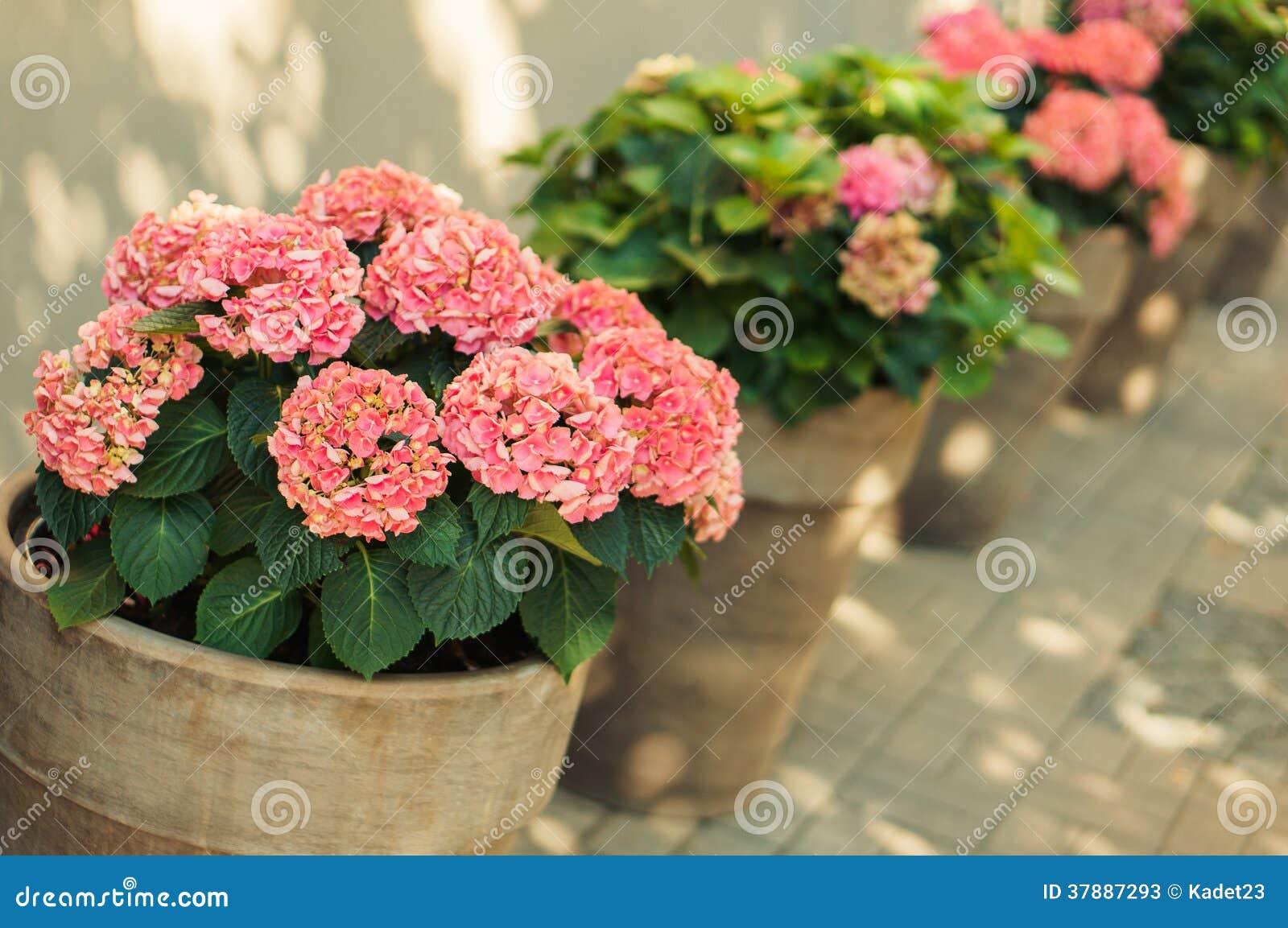 Bloemen in de pot
