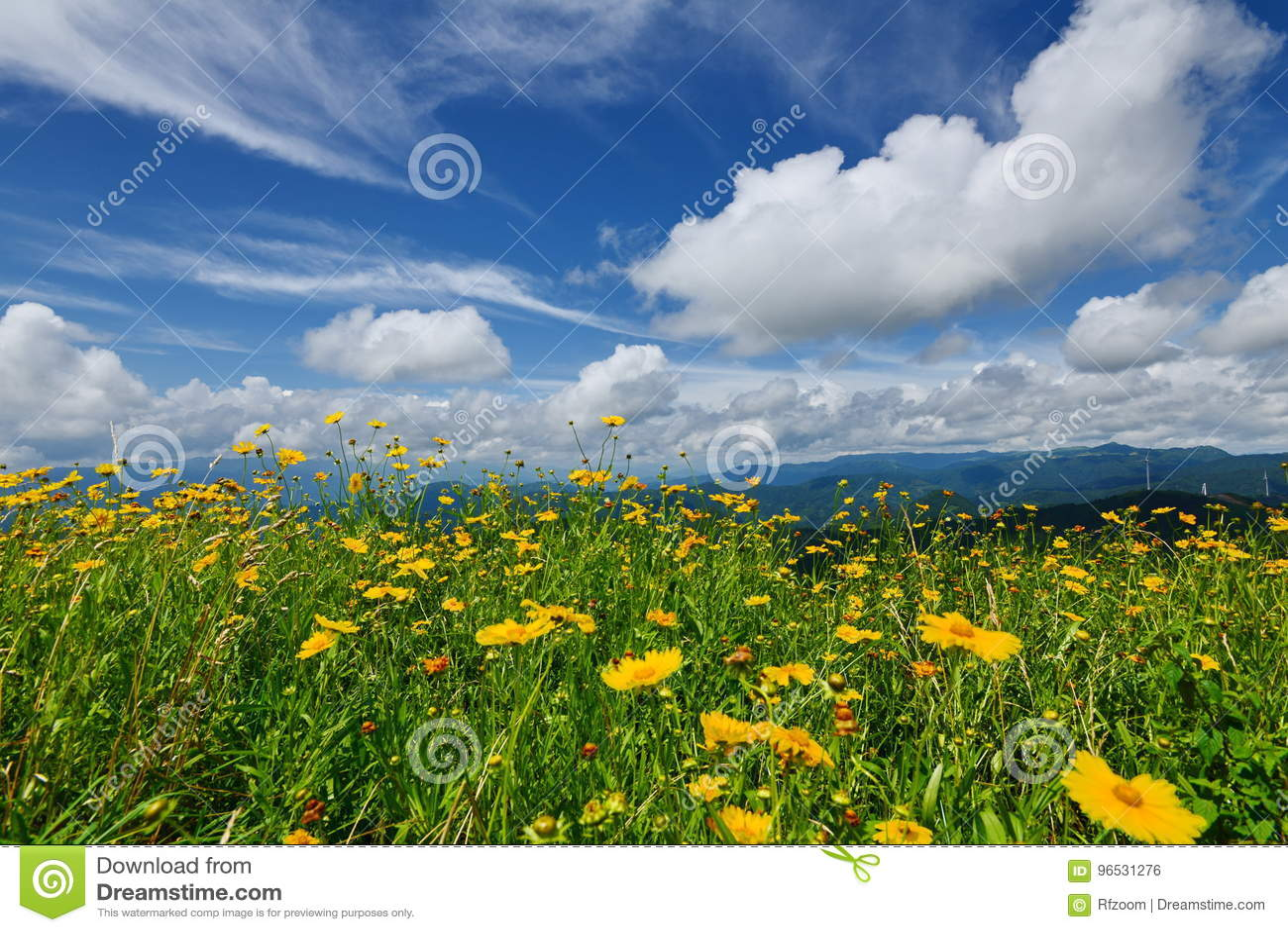 Bloemen en Blauwe Hemel