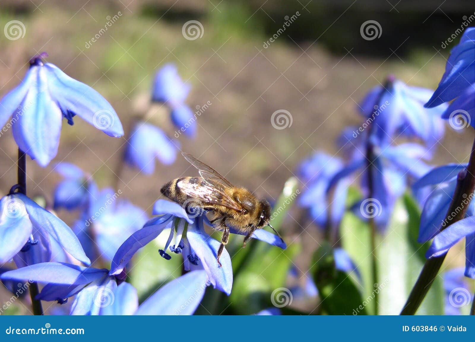 Bloemen en een Bij