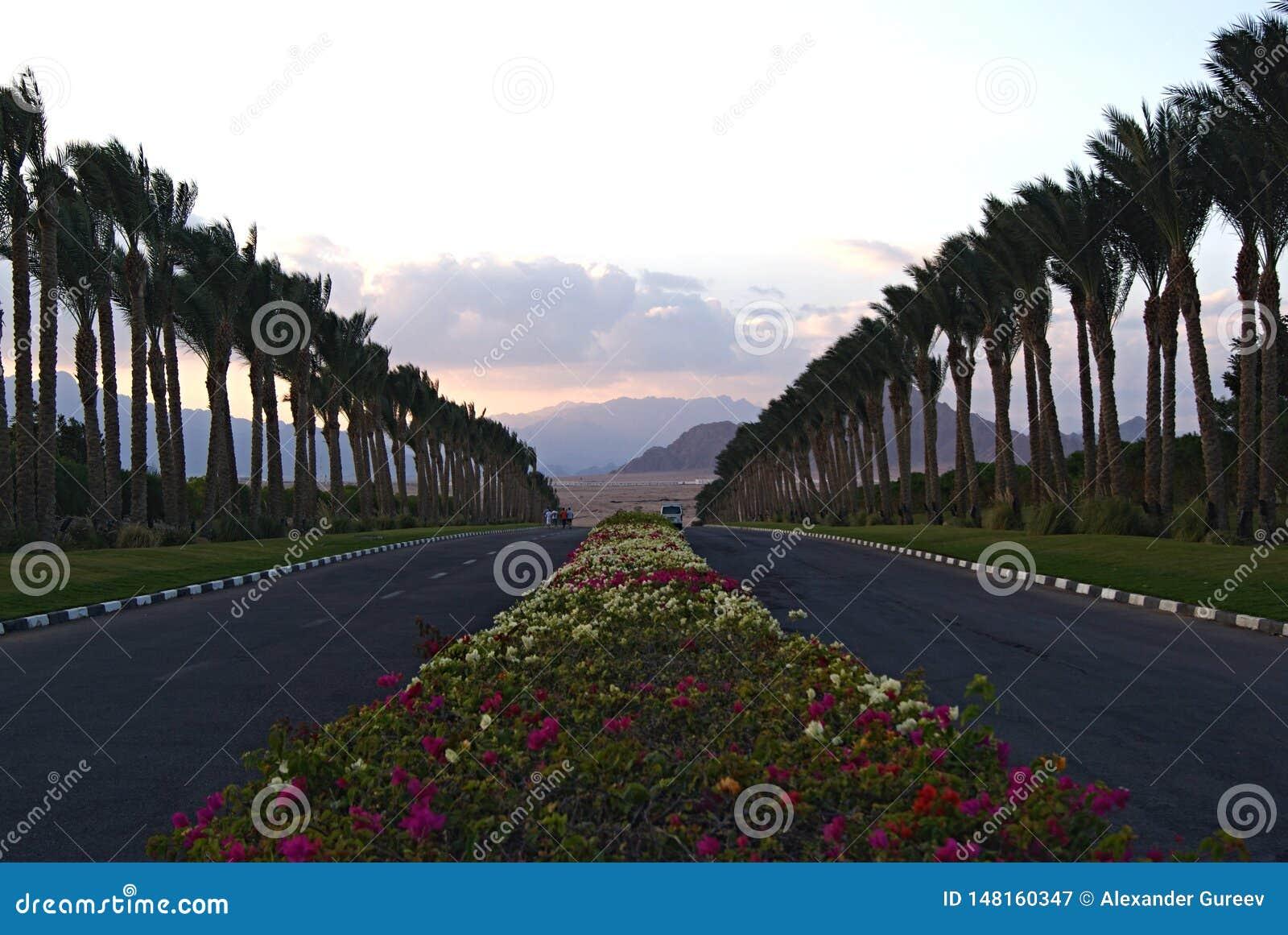 Bloemen en palmen op de manier aan de woestijn