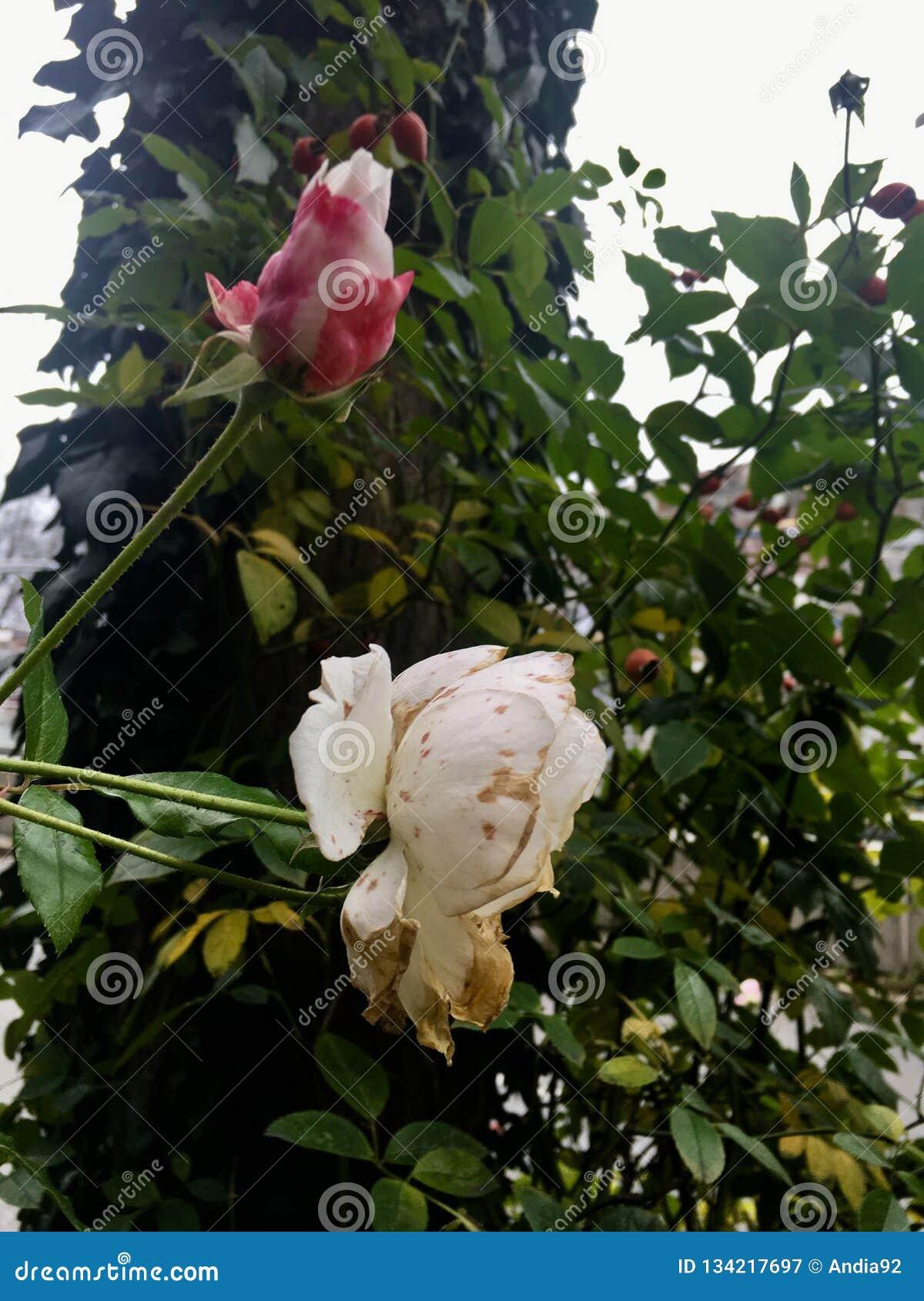 Bloemen en schoonheid