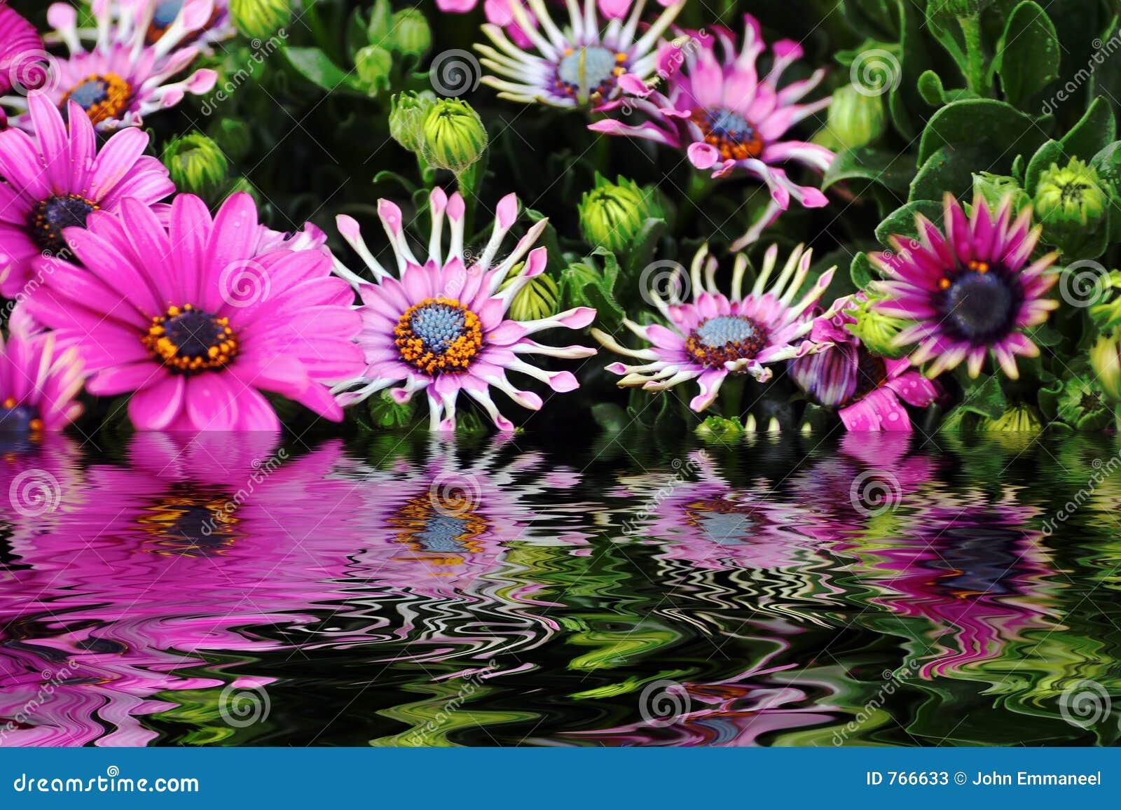 Bloemen en water