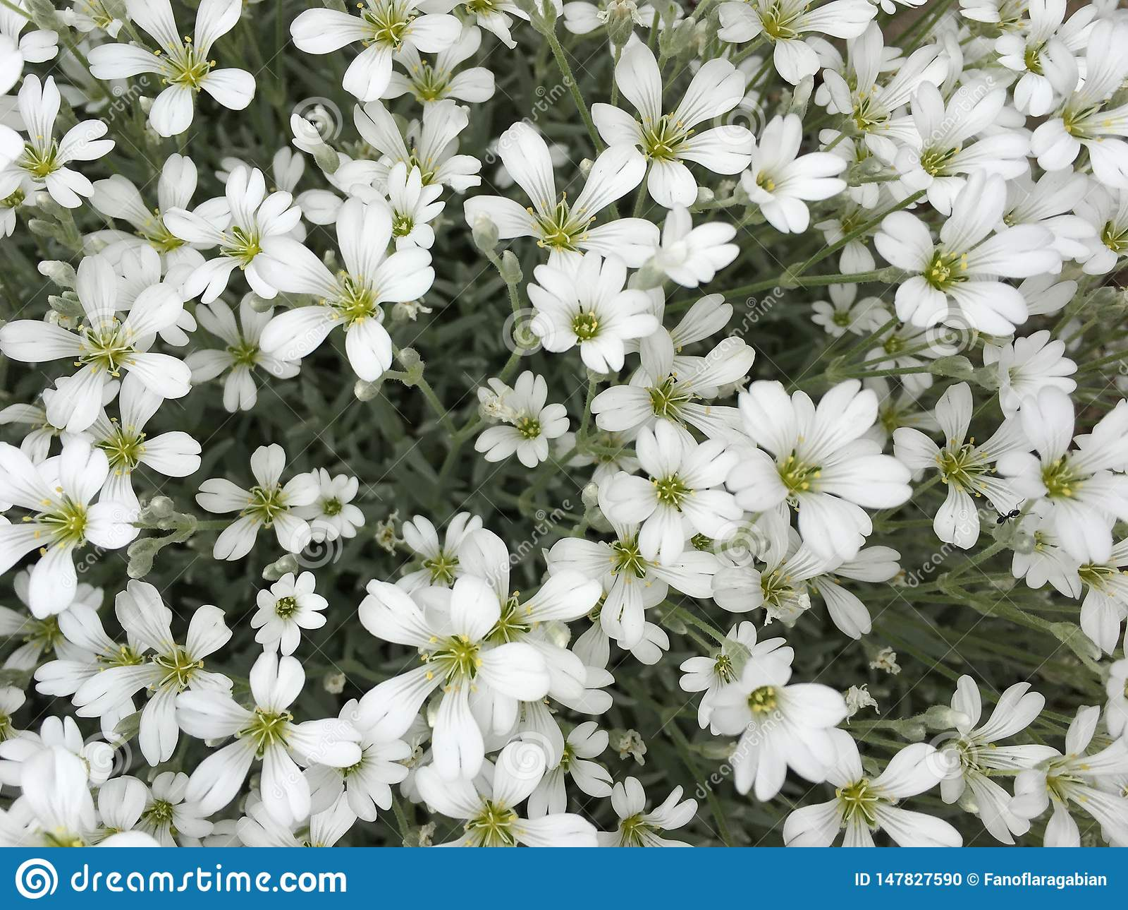 Bloemen, enkel witte kleine bloemen, maar zo vrij