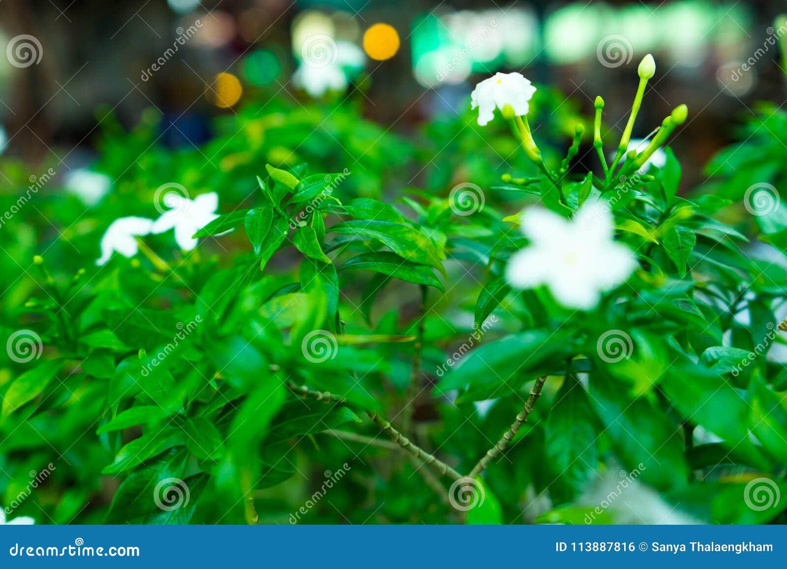 Bloemen het is gekregen witte kleur