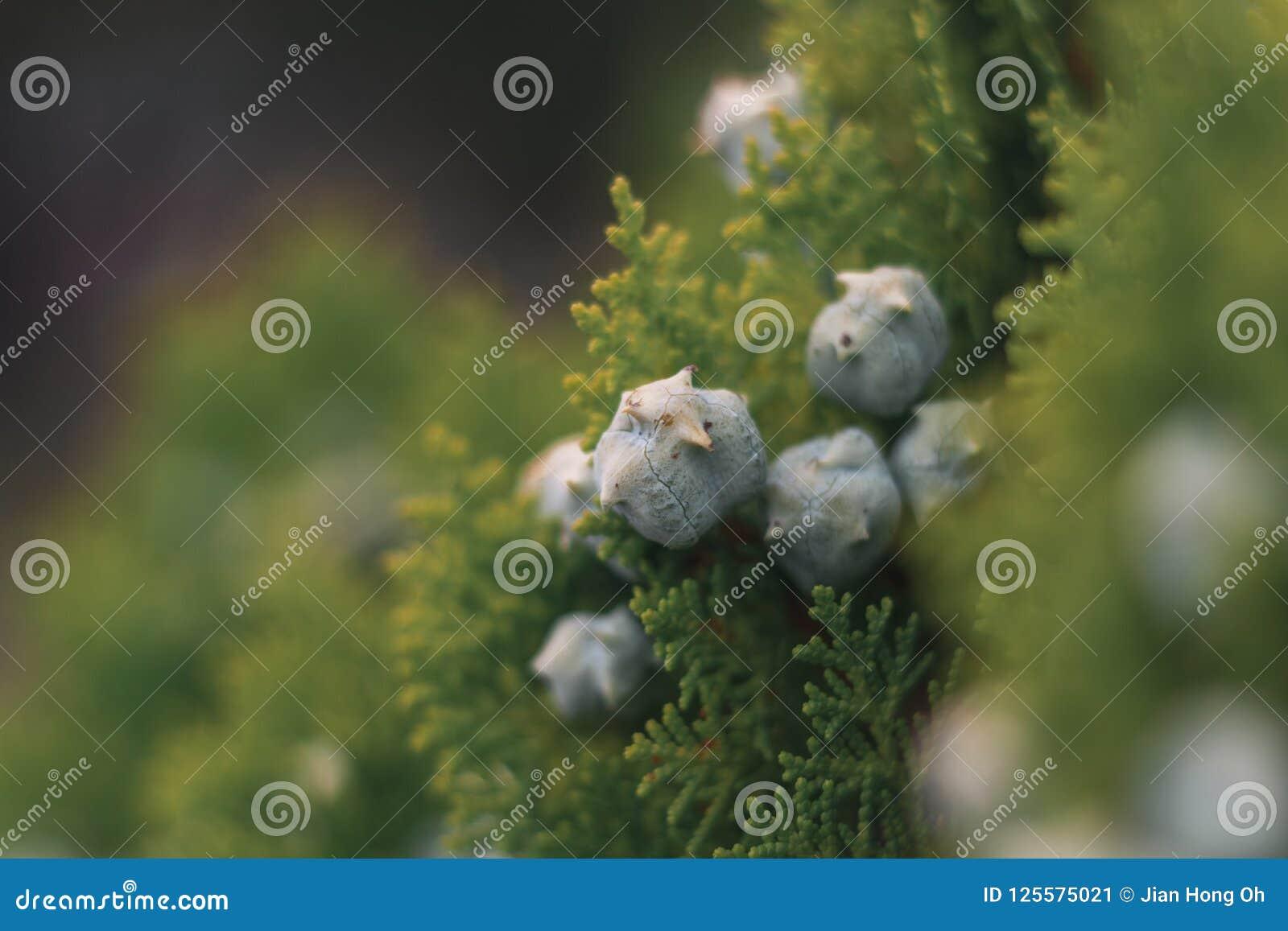 Bloemen in macro