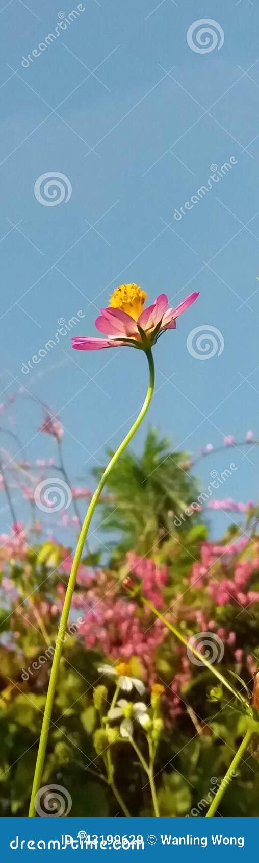 Bloemen onder de blauwe hemel