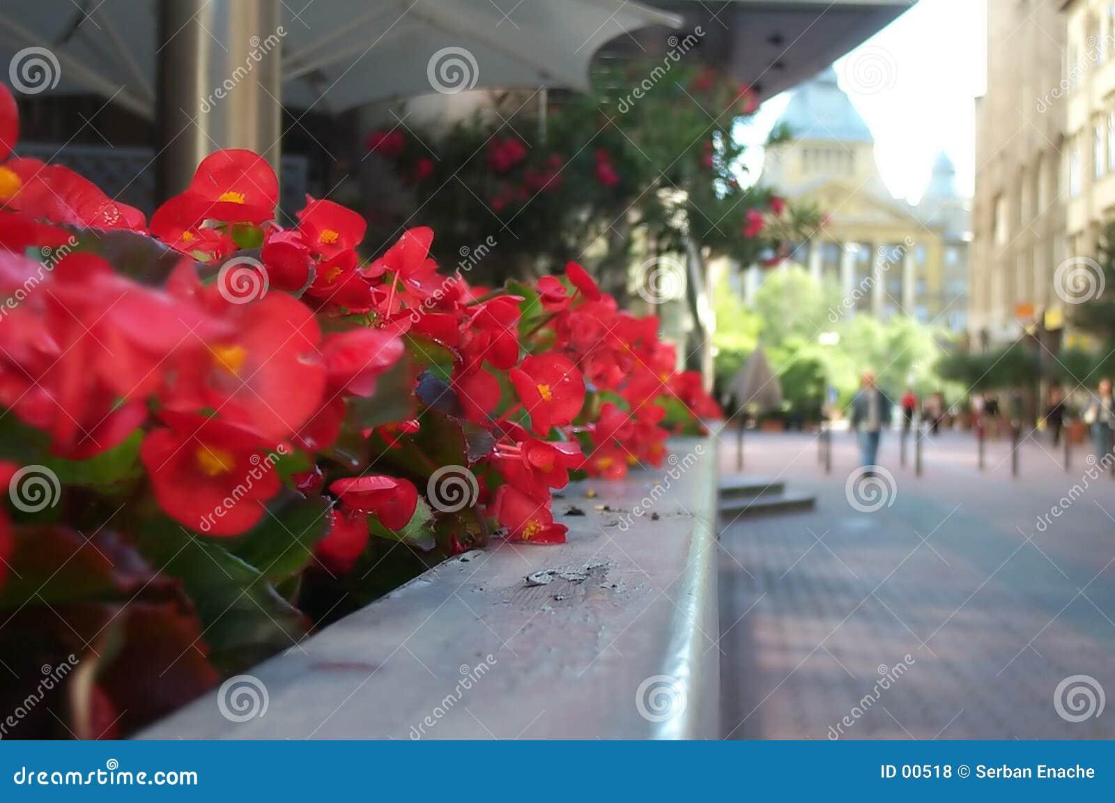 Bloemen op bedrijfsstraat