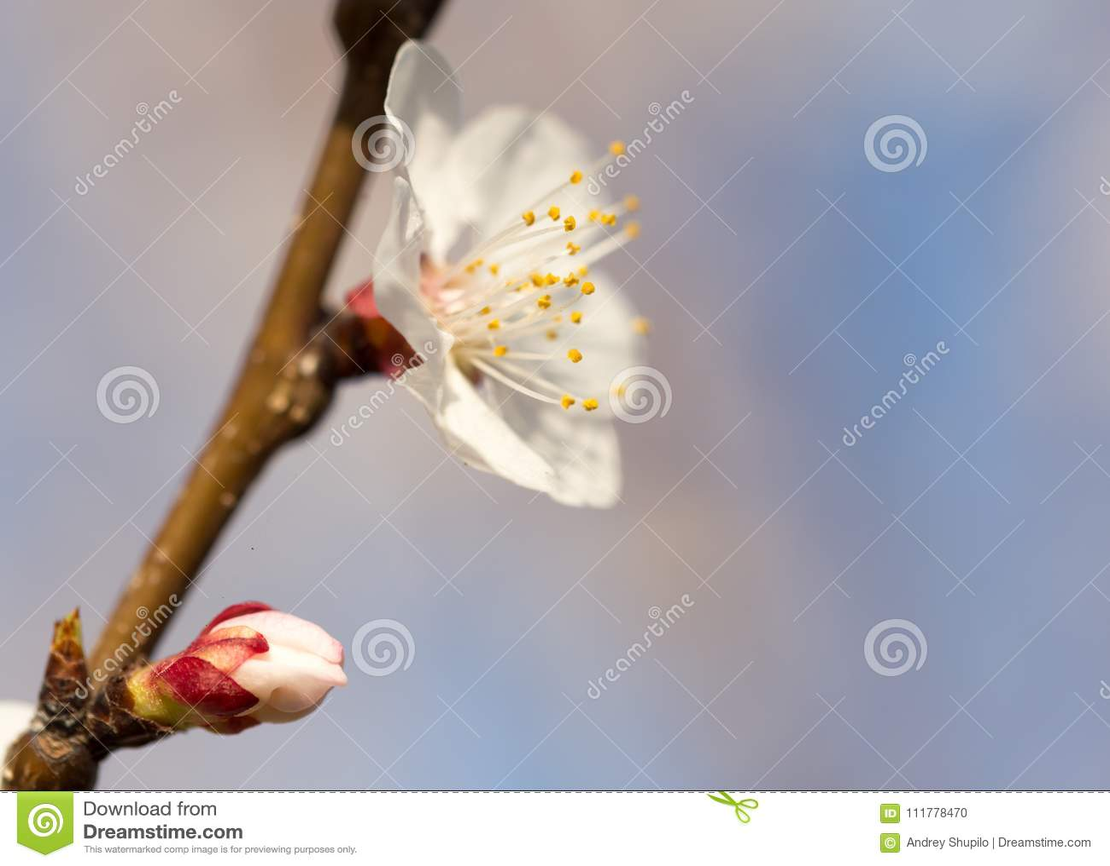 Bloemen op de boom tegen de blauwe hemel