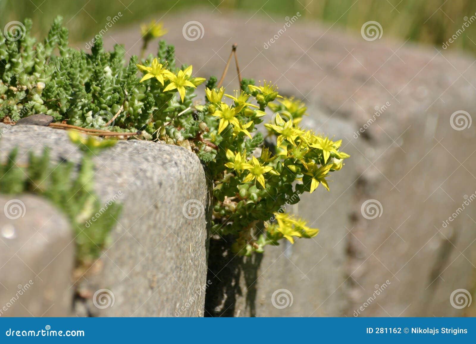 Bloemen op de steen