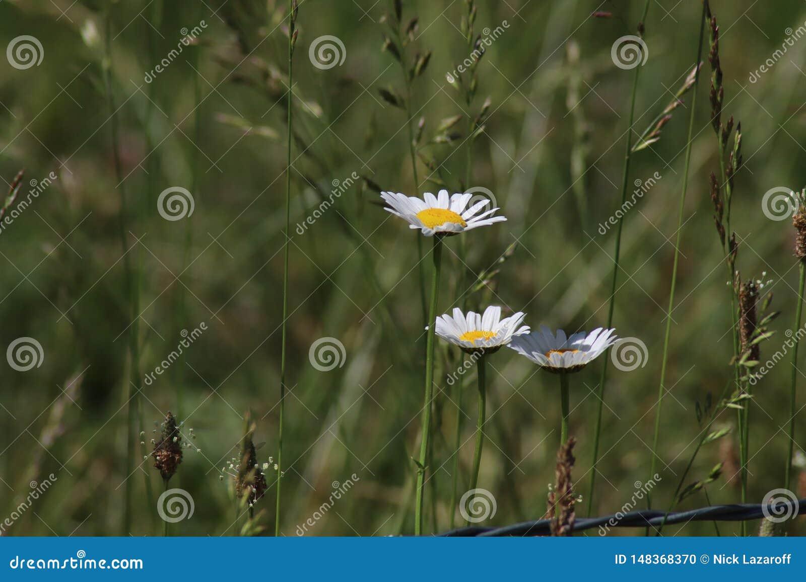 Bloemen op Gebied