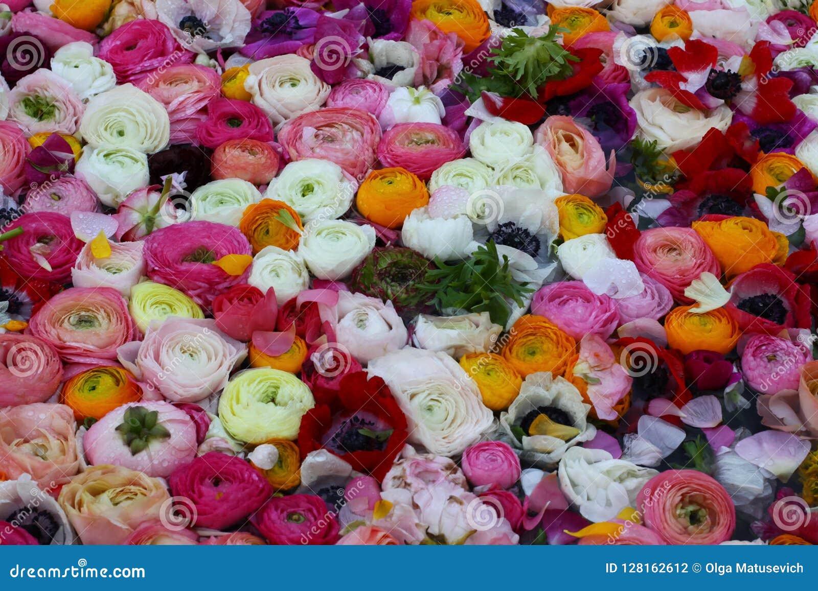 Bloemen op het water